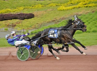 Abuckabett Hanover (#2) in his victory over Perfect Sting