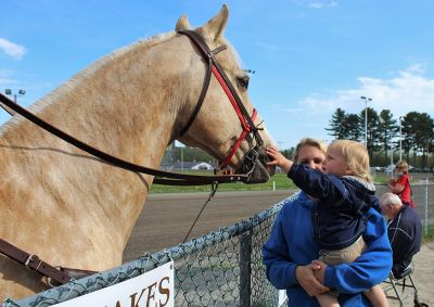 LEO, the Outrider's Palomino horse greets fans at Cumberland